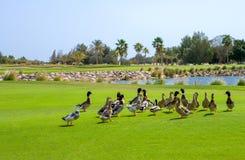 qatar Fotografia de Stock Royalty Free