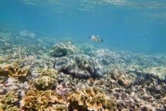 QE珊瑚1条鱼 免版税库存图片