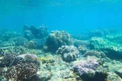 QE Coral Reef Stock Photo