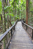 QE FI Rainforest Boadwalk vert Royalty Free Stock Photography