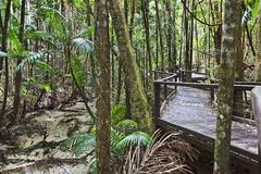 QE FI Rainforest boardwalk Royalty Free Stock Photography