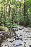 QE FI Rainforest Creek Vert Royalty Free Stock Photos