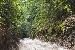 QE FI Rainforest road Stock Image