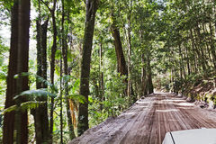 QE FI Rainforest Road Driving Stock Images
