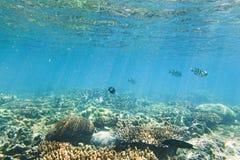 QE-korallfisk Fotografering för Bildbyråer