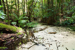 QE Rainforest Creek Hor Royalty Free Stock Photography
