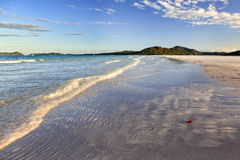 QE Whitsundays Beach Red leaf Royalty Free Stock Images