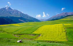 Qilian mountains Stock Photography