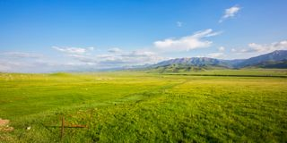 Qilian Plateau meadow in summer royalty free stock photography