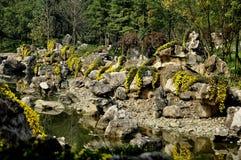 Qingbaijiang Kina: Chrysanythemum trädgård Arkivfoton