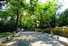 Qingdao οκτώ μεγάλη πορεία περασμάτων Στοκ εικόνα με δικαίωμα ελεύθερης χρήσης