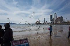 Qingdao landskap royaltyfri bild