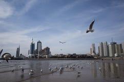 Qingdao landskap arkivfoto