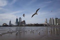 Qingdao landskap fotografering för bildbyråer