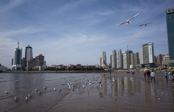 Qingdao scenery Royalty Free Stock Photo