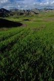 Qinghai alpine grasslands Royalty Free Stock Photography