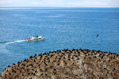 Qinghai Cormorant Island Stock Photos