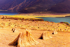 Qinghai Datong Heiquan Reservoir Autumn Stock Photography
