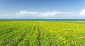 Qinghai Jeziorny Sceniczny teren Zdjęcia Stock