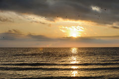 Qinghai Lake with geese Royalty Free Stock Photo