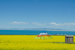 Qinghai Lake and Rape Flower. The landscape of Qinghai Lake in China Royalty Free Stock Photo