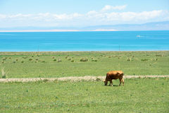 Qinghai Lake scenery Royalty Free Stock Images