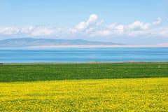 Qinghai Lake scenery Stock Photo