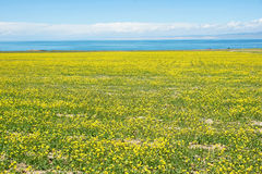 Qinghai Lake scenery Royalty Free Stock Photos