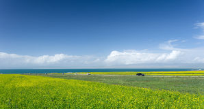 Qinghai Lake Scenic Area Stock Image