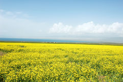 qinghai landskap Royaltyfria Foton