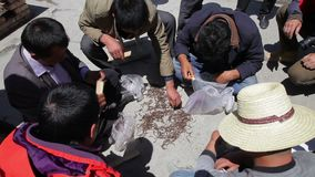 Qinghai - 29. MAI: Tibetanisches Handels-cordyceps sinensis auf Stra?e am 29. Mai 2015 Qinghai-Provinz, China stock footage