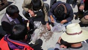 Qinghai, MAJ - 29: Tybeta?ski handlarski cordyceps sinensis na ulicie, Maj 29, 2015, Qinghai prowincja, Chiny zbiory
