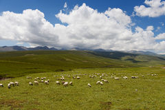 Qinghai Province grasslands Royalty Free Stock Photo