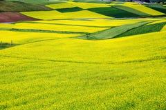 Qinghai Qilian Zhuoer Halna sceneria i Cole kwiaty obrazy royalty free