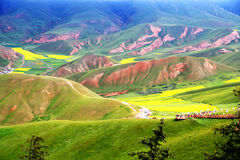 Qinghai Qilian Zhuoer Mountain scenery and Cole flowers Royalty Free Stock Image