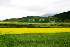 Qinghai Qilian Zhuoer Mountain scenery and Cole flowers Stock Photography