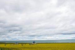 Qinghai sjö, Qinghai Kina Arkivbild