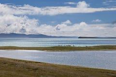 Qinghai - Tibet platå Arkivbilder