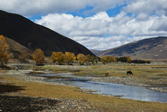 On the qinghai-tibet plateau scenery royalty free stock photography