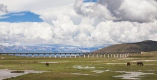 Sheep on the Qinghai-Tibet Plateau. The Qinghai - Tibet railway is nearly two thousand 13 kilometers in length. Gela Segment of Qinghai - Tibet Railway is state Royalty Free Stock Photo
