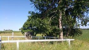 Qld della tomba di Bidwill Fotografie Stock