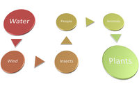 Qms gmp Hacp и программа продовольственной безопасности иллюстрация вектора