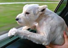 Qué podemos aprender de perros Fotografía de archivo libre de regalías