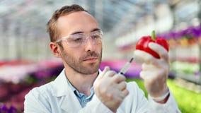 Químico de sexo masculino enfocado que inyecta la solución en pimienta dulce roja usando la jeringuilla para la prueba de la bioq almacen de video