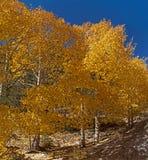 Quacking Aspen sulla strada secondaria scenica 1 immagini stock libere da diritti