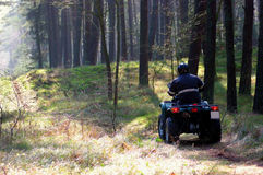 Quad in forest. A man driving a quad bike (ATV) through a forest Stock Image