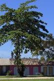 Quadrado historyczny główny plac Trancoso Obraz Royalty Free