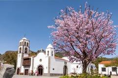 Quadrado principal da cidade Santiago del Teide e da árvore de amêndoa fotos de stock royalty free