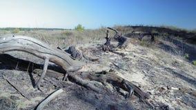 Quadrados queimados no resultado de Forest As A de um fogo Longtime vídeos de arquivo
