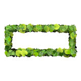 Quadrangle, rectangle made from green leaves isolated on white background. 3D render. Stock Photo